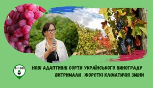 Интервью-Ковалёва